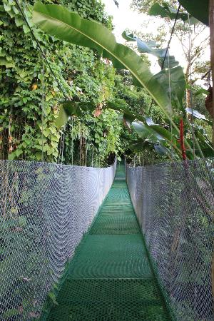 Los Lagos Hotel Spa & Resort: the pedestrian shortcut from our room to the main area, it included a suspension bridge!