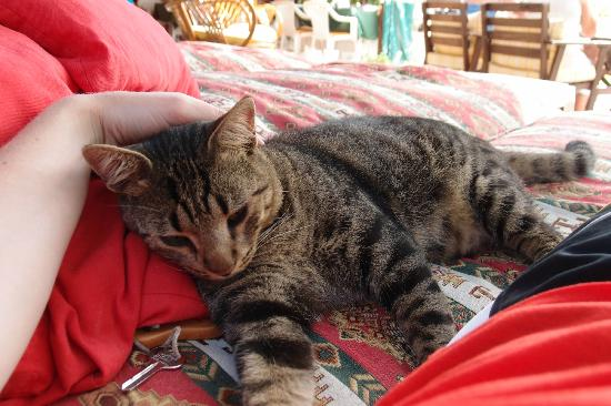 Kilim Hotel: Chilling with one of the lovely hotel cats