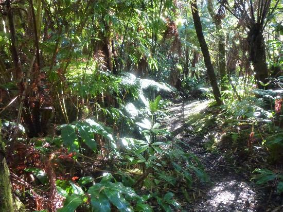 My Island Bed and Breakfast: Rain Forest Walk on the 7 acre property