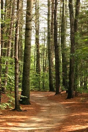 Chocorua, Nueva Hampshire: 5 Miles of Nature Trails