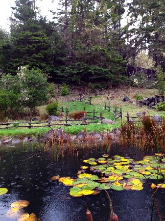 Brewery Gulch Inn: Grounds of BGI: beautiful even with rain