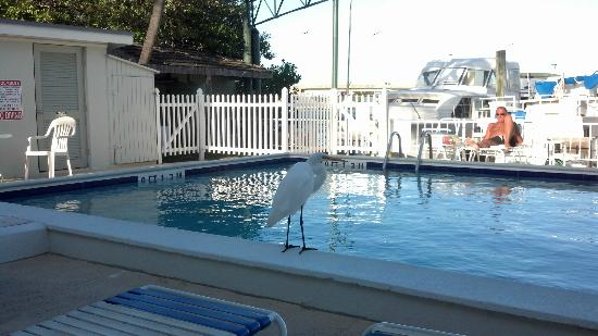 Harborside Motel &amp; Marina: Crane came to visit