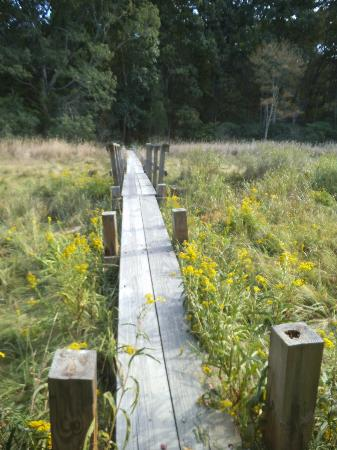 Boardwalk through Old Town Hill Reservation Newbury MA.