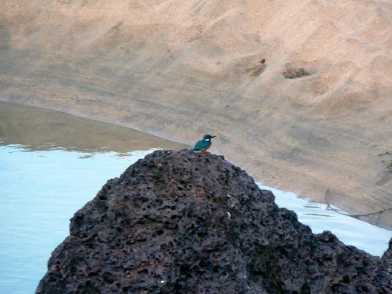 Dwarka Eco Beach Resort: You are guaranteed many kingfisher sightings