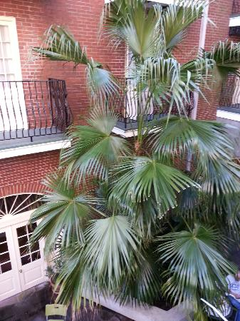 Hotel St. Marie: huge palm in courtyard