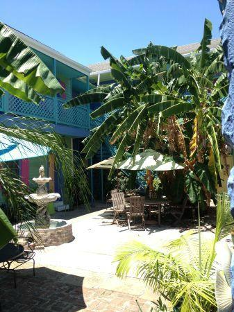 Creole Gardens Guesthouse Bed &amp; Breakfast: Enjoy our relaxing sunny Banana Tree Courtyard !