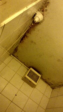 Shower Ceiling Mould Picture Of The Lonsdale Hotel