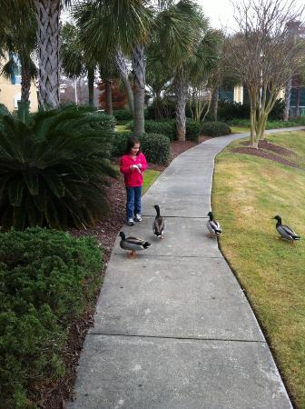 Hampton Inn Myrtle Beach-Broadway @ The Beach: Daughter feeding ducks outside hotel.