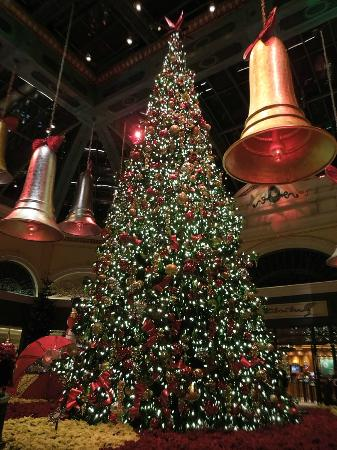 Huge Christmas Tree Picture Of Conservatory Amp Botanical