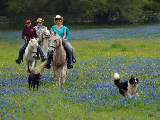 BlissWood B&B at Lehmann Legacy Ranch: The perfect location for a Horseback ride!