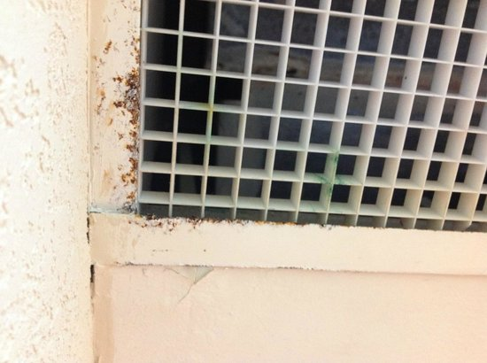 Best Miami Hotel: air vent with mold only inches from your bed