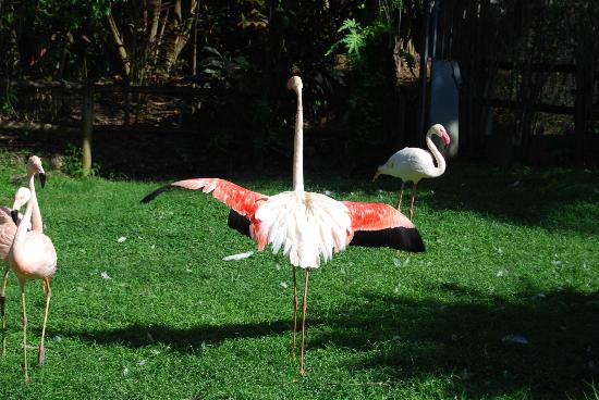 flamant rose photo de jardin botanique de deshaies deshaies tripadvisor. Black Bedroom Furniture Sets. Home Design Ideas