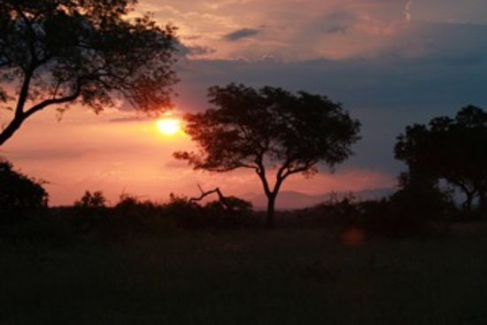Londolozi Varty Camp: Sunset