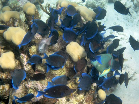 The Meridian Club: Feeding frenzy on the reef