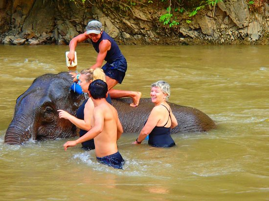 Libra Guest House: Bathing with the elephants