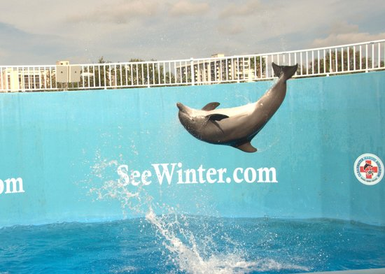 Dolphin Watch Tours Clearwater Florida