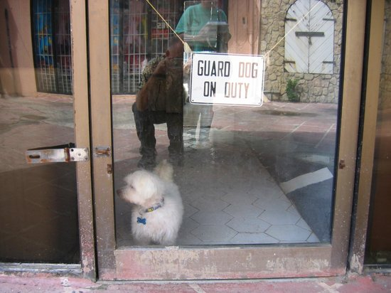 Cottages By The Sea: Christiansted - Beware of Guard Dog