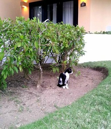 Bavaro Princess All Suites Resort & Spa: Hotel's pets