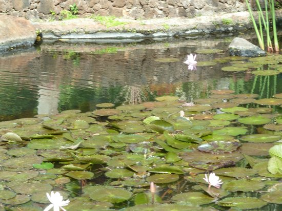 Lovely fish pond and gardens for Fish ponds melbourne