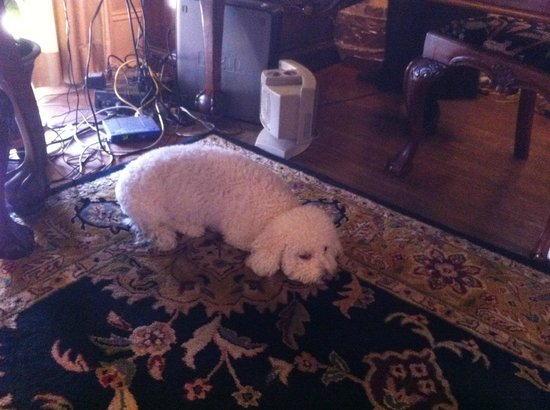 The Sayre Mansion Inn: Cute little lazy dog (perfect for people who fear dogs :-P)