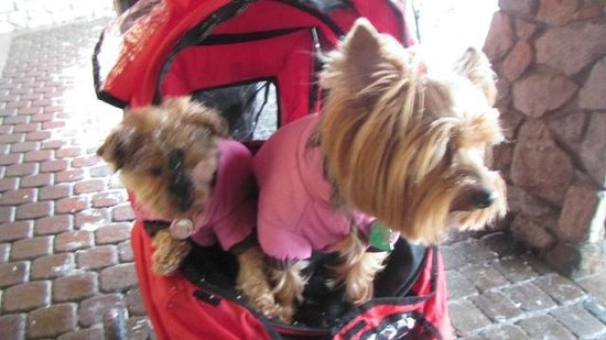 3 Peaks Resort and Beach Club: Crumpet and Muffin enjoying their stay at 3 Peaks Resort!