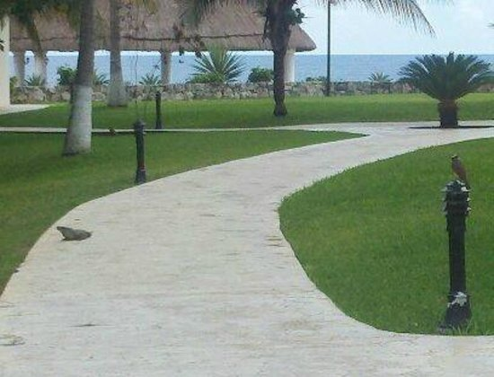 Hard Rock Hotel Riviera Maya: grounds