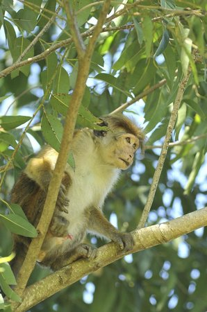 Jungle Tide: monkey in the tree