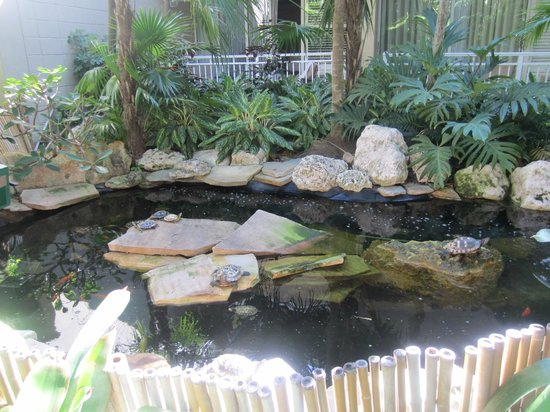 Pier House Resort and Spa: Turtle pond