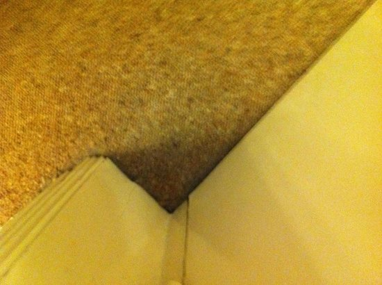 1 Lexham Gardens: Dirty carpet