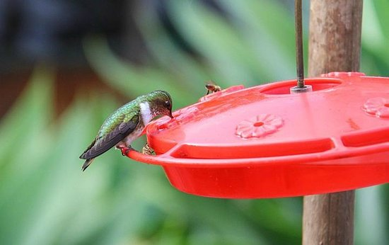 Savegre Hotel, Natural Reserve & Spa: Hummer at the Savegre