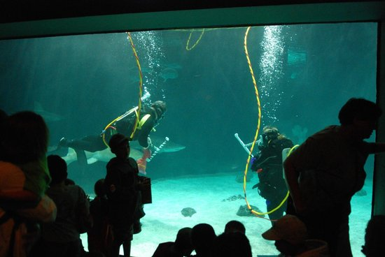 Audience Watching The Sharks Picture Of Point Defiance Zoo Aquarium Tacoma Tripadvisor