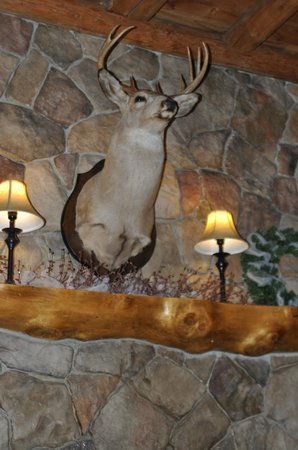 Loon Lodge Inn &amp; Restaurant: This fellow presides over the Loon Lodge living room.