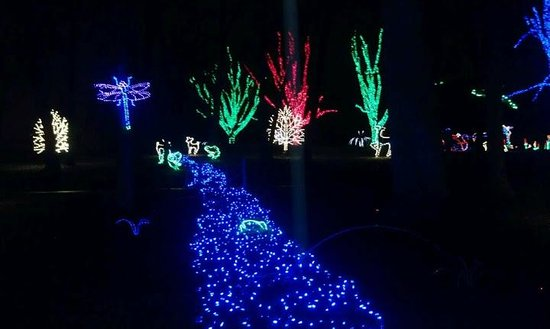 The stream of lights at the Meadowlark Botanical Garden
