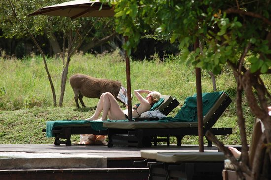 andBeyond Kichwa Tembo Tented Camp: Warthogs roam freely within the camp grounds