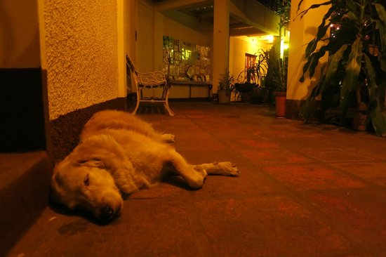 La Mariposa Spanish School and Eco Hotel: Condor sleeping in one of the main areas.