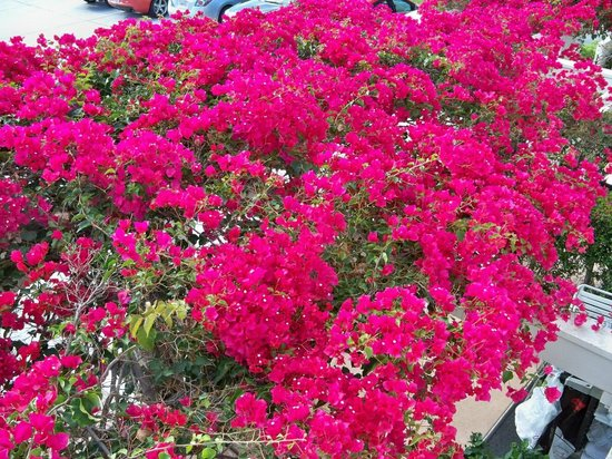 Glorietta Bay Inn: Floral vine