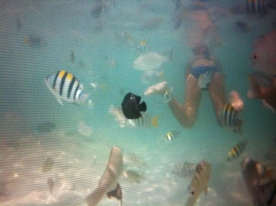 The Racha: Swimming with the fish