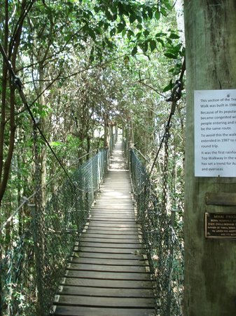Canungra, Australia: Tree top walk way - No sign of Indiana Jones!!
