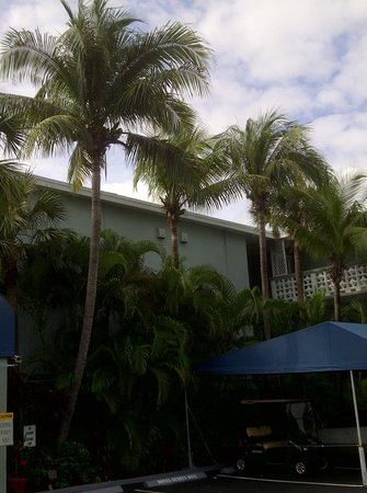 BEST WESTERN PLUS Oakland Park Inn: Palm trees in parking lot