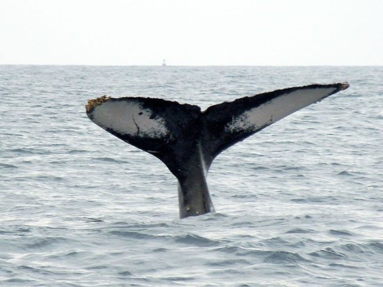 ClubHotel RIU Jalisco: whale watching tour