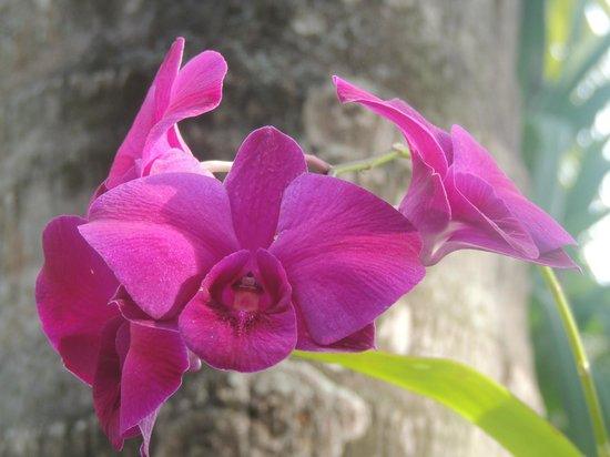 Anantara Kihavah Villas: Orchids were everywhere