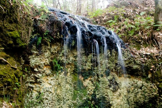 Chipley (FL) United States  city pictures gallery : Chipley, FL: Florida Waterfall
