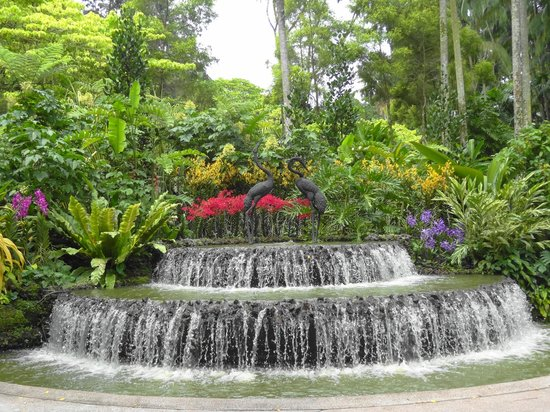 The Vip Orchid Gardens Picture Of National Orchid Garden
