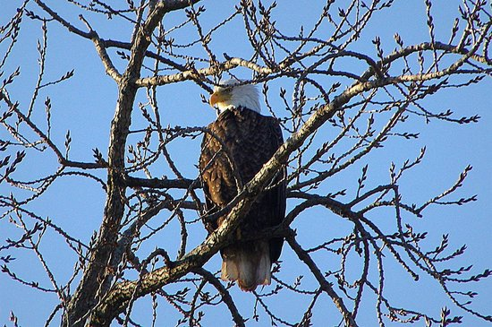The Herrington Inn & Spa: Eagle near the river