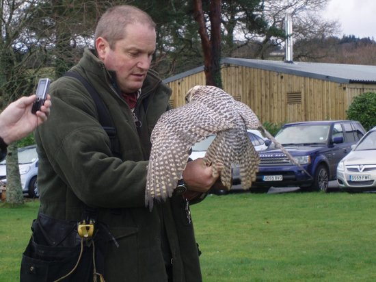 Ilsington, UK : Christmas Eve, Falconry display