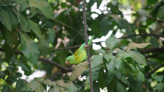 La Estancia: Small green parrot
