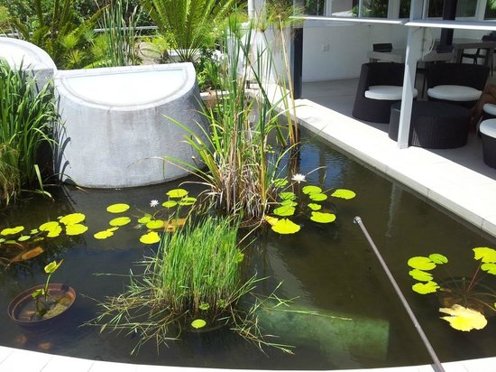 Serene-estate Boutique Guesthouse: Pond