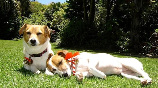 Constantia, Sør-Afrika: Our Lovely Dogs