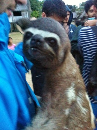 The Amazon Jungle Guide: Sloth