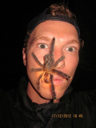 The Amazon Jungle Guide: Face-to-face tarantula encounter